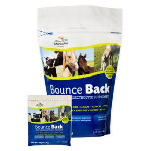 Bounce Back Resealable Poly Bag 4lb